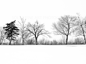 a-line-white-on-white-6x8sfp